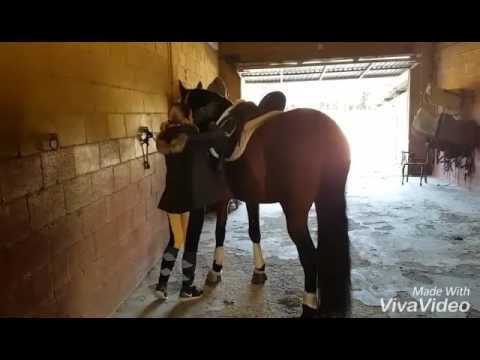 Xxx Mp4 CAMPERO PALO III Tacking Up And Preparing PRE Piro Negative Dressage Horse For Sale TBSH Com 3gp Sex