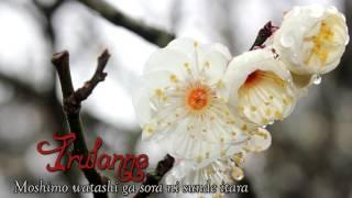 Irulanne ~ Moshimo Watashi Ga Sora ni Sunde Itara (Cover)