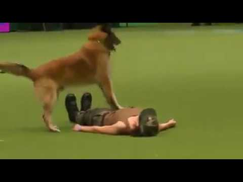 DOG DOING AWSOME ACTIVITY SHOCKED