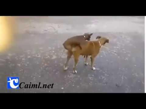 Sex dog funy