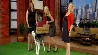 Mishka the Talking Husky Dog appears on TV!!!