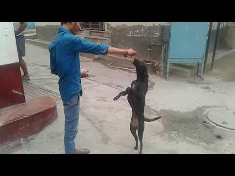 Dogi boy