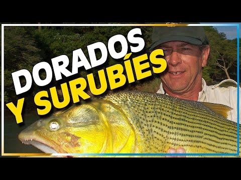Pescando Dorados y Surubíes en Itá Ibaté Zona Safari TV