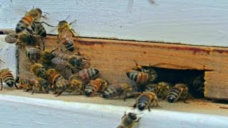 Entrance Reducer - Beekeeping