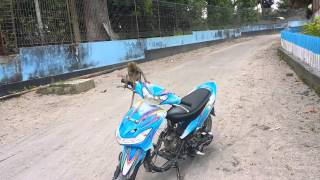 Video lucu monyet naik motor