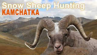 Snow Sheep Hunting (chasse) Kamchatka Russia By Ovini Expéditions 2016