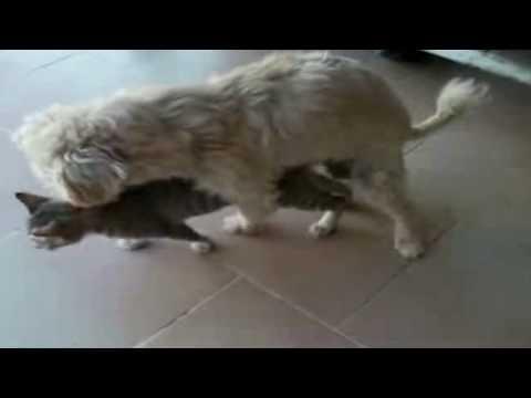 Xxx Mp4 Dog Having Sex With Cat 2 3gp Sex