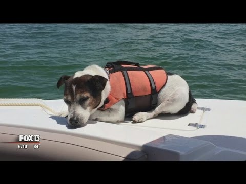Swimming dog rescued after 3 hours in Gulf of Mexico