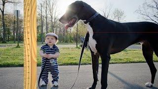 10 Rarest Dog Breeds Ever