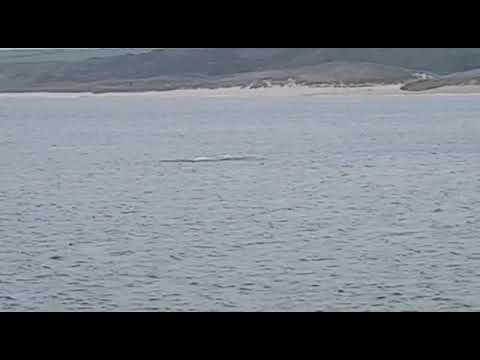 Xxx Mp4 Dolphins And Scottish Sea Trout 3gp Sex