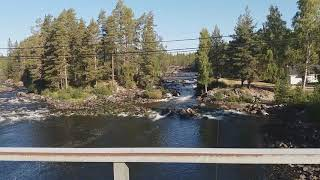 Куда медведи на рыбалку ходят в Швеции