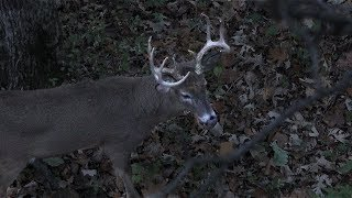 GREAT RUT STANDS - Hunting Thermal Hubs