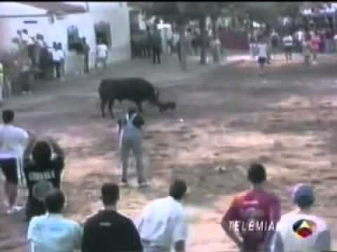 Perro se enfrenta a toro para salvar a un hombre