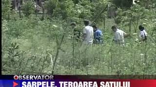 Un sarpe lung de peste 5 metri terorizeaza un sat constantean 4 IUNIE 2011
