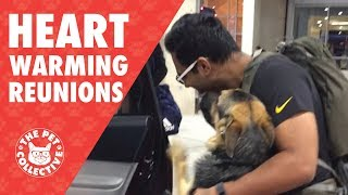Try Not To Cry   Dogs Reuniting With Their Owners