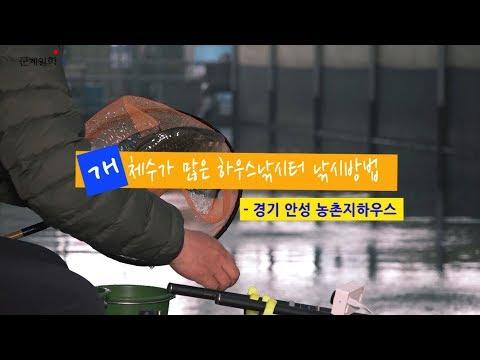 Xxx Mp4 하우스 34 개체수가 많은 하우스낚시터 낚시방법 경기 안성 농촌지하우스 2018 11 6 3gp Sex
