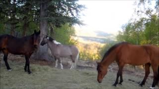 AHHJ Rainbow Ranch ALASKA