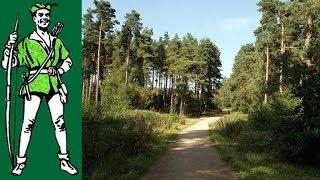 Thieves Wood, Nottinghamshire.