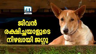 Moithu Jaggu rare friendship| Nalla Vartha | Mathrubhumi News
