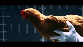 Mercedes Chicken - MAGIC BODY CONTROL - Funny Very Amazing Commercial