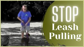 Stop leash pulling  in 5 minutes | Solid K9 Training