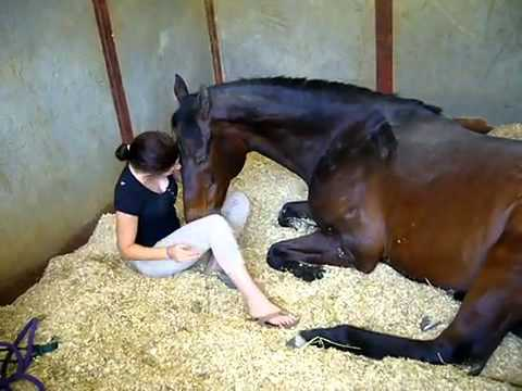 Xxx Mp4 A Brave Girl And Horse 3gp Sex