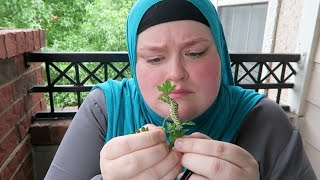 Compliments and Loneliness | Day #3 Ramadan 2015 | Nye Armstrong