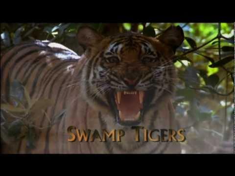 Xxx Mp4 Swamp Tigers From Sundarbans Part 1 6 3gp Sex