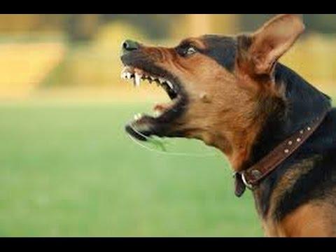 VTC14 Cách xử l� khi bị chó tấn công