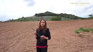Nueva plantación: Espantalobos