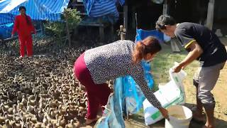 The Amazing smart farmer riasing 5000 Ducks make money 10000 Dollar one years