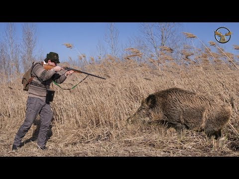 Xxx Mp4 Excellent Hunting For Wild Boar Video Collection Of Good Shots 3gp Sex