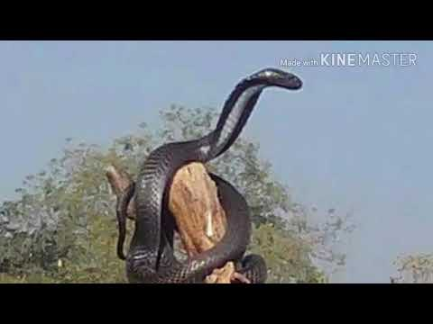 Xxx Mp4 Bhojpuri Xxx Com 5 3gp Sex