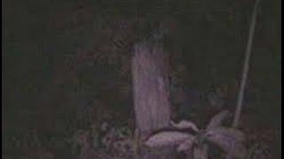 Video Rekaman Penampakan Hantu Nyata Bondowoso Full Sangat Mistis