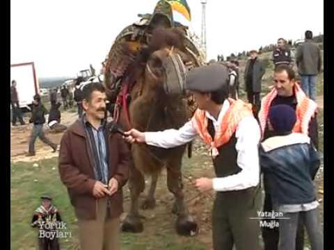deve güreşleri