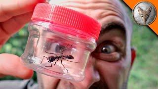 Bullet Ant Adventure!