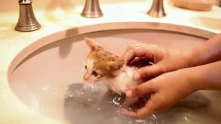 First bath for foster kittens
