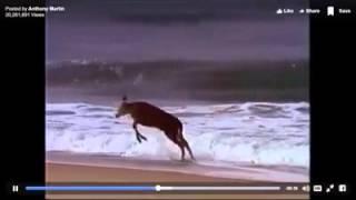 Voit des animaux de la mer pour la première fois dans sa vie