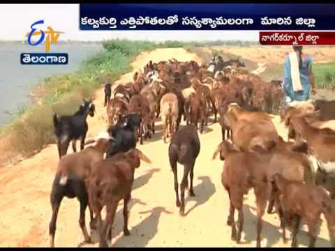 Kalwakurthy Lift Irrigation Project Bring Smiles in Farmers Face in Nagarkurnool Dist
