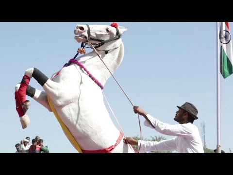 Horse Dancing At The Cattle Fair In Pushkar Rajasthan India