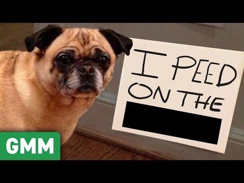 Name That Pet Shame GAME ft. Shameless Cast