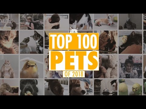 Xxx Mp4 Best Pets Of The Year 2018 Part 1 3gp Sex
