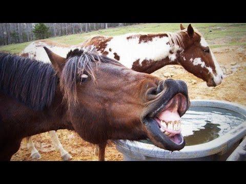 Xxx Mp4 Funny Horses 2016 HD Funny Pets 3gp Sex
