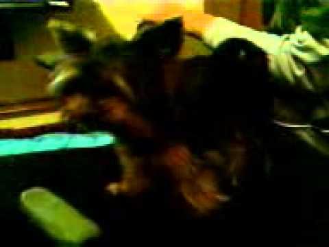 Xxx Mp4 Horni Litle Dog Ronny 3gp Sex