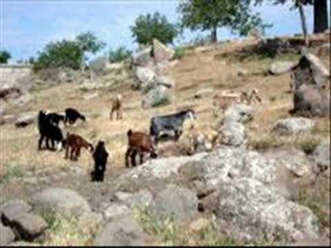 GAZIANTEP Sahinbey mülk köyü Davul Zurna Aysel Kiz