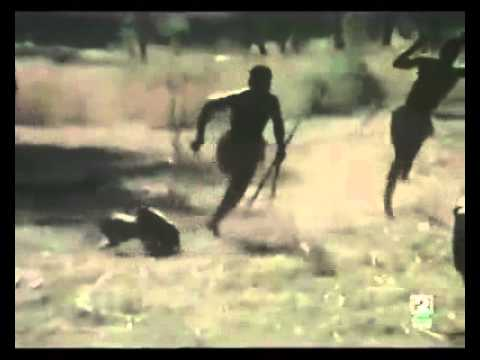 Macacos usados para caçar porcos na África