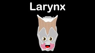 Human Body for Kids/Larynx for Kids/Larynx Facts for Kids
