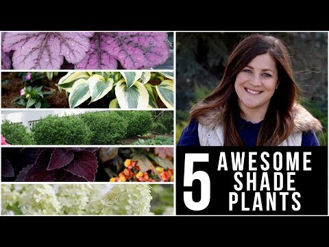 Xxx Mp4 5 Awesome Plants For Shade 🌿🌥👍 Garden Answer 3gp Sex