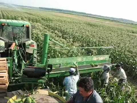 MEYER S FARMS FIELD PACKING SWEET CORN