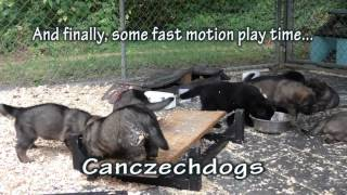 Puppies And Some Noise
